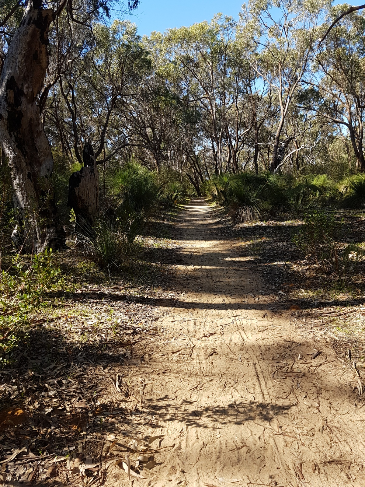 On the Rose Trail at Yanchep National Park